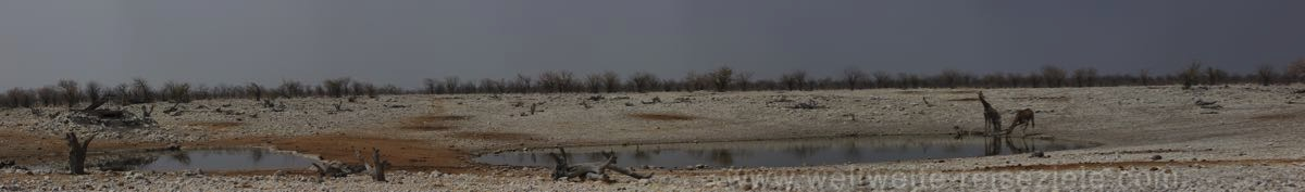 Zwei Giraffen am Olifantsbad Wasserloch, Etoscha, Namibia
