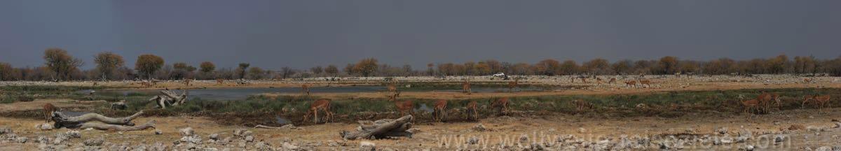 Goas Wasserloch, Etosha, Namibia