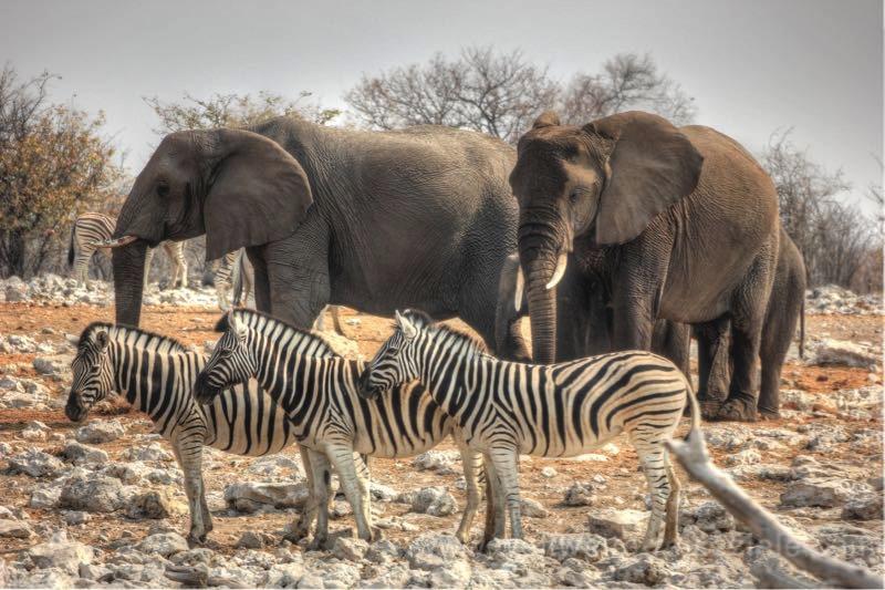 Elefanten und Zebras am Wasserloch, Etosha Namibia