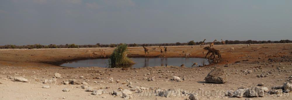 Chudop Wasserloch mit Giraffen, Etosha Nationalpark