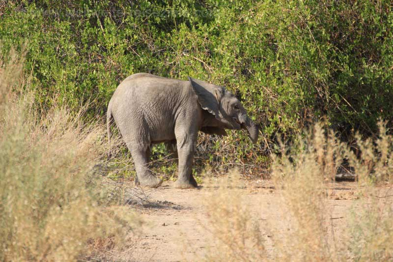 Baby Elefant bei der White Lady Lodge
