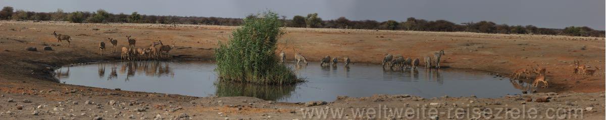 Chudop Wasserloch mit Zebras, Kudus, Etosha NP