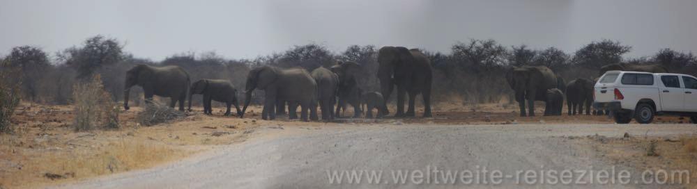Elefantenfamilie am Tsumcor Wasserloch, Etosha Nationalpark