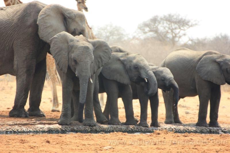 Elefanten von klein bis gross am Tsumcor Wasserloch, Namibia