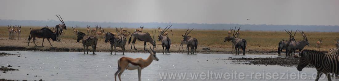Andoni Wasserloch mit Oryx, Springbok, Zebras, Etosha Nambia