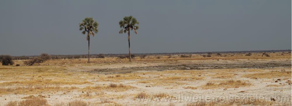 Wasserloch Twee Palms Etosha Nambia