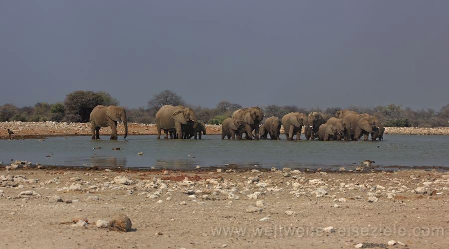 Grosse Elefantenfamilie beim Klein Namutoni Wasserloch, Etosha Nationalpark