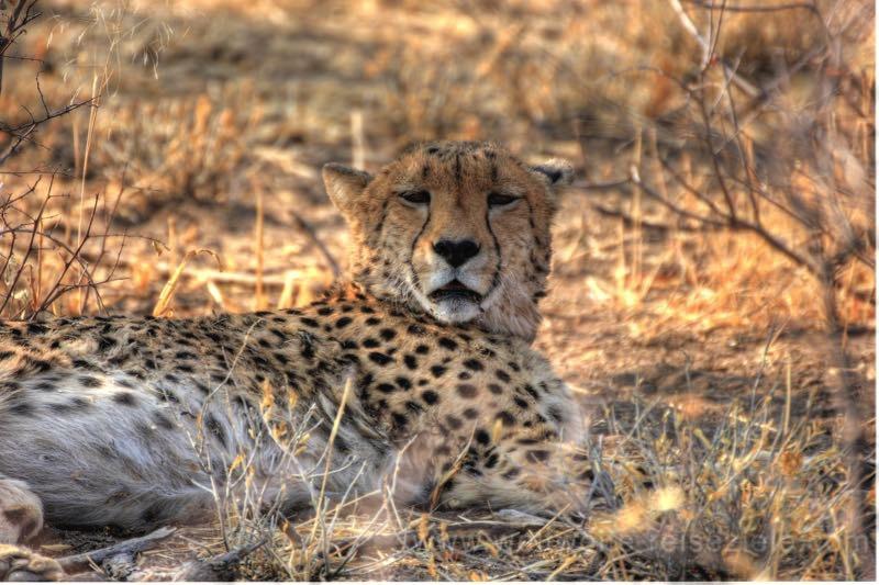 Ausflug zu den Geparden in der Okonjima Lodge, Namibia