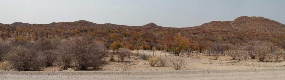 Buschwald auf dem Weg nach Etoscha