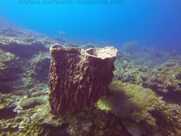 Tauchrevier in Redang, Korallen