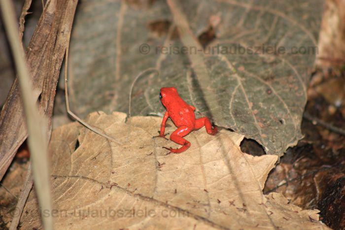 Ferienziel Costa Rica, Mittelamerika